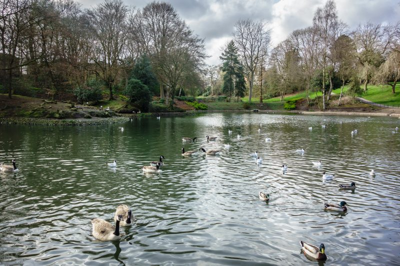 Photograph of the lake at Queens Park, Bolton.