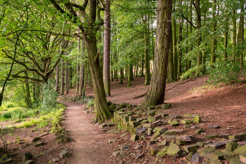 Photo of the woodland path on the eastern side of Lower Rivington Reservoir in Rivington, Lancashire.