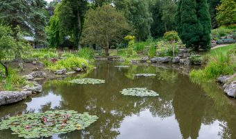 Photograph of the Japanese Gardens, Avenham Park, Preston, Lancashire.