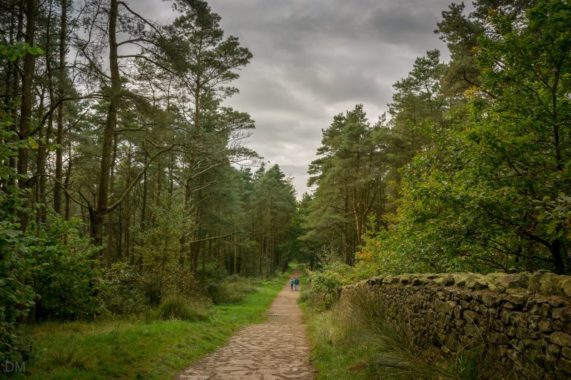 Path by Queens Grove at Beacon Fell Country Park.