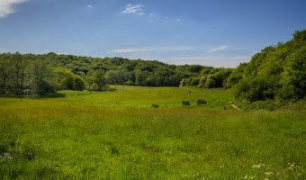 Photograph of the meadows at Yarrow Valley Country Park in Chorley.