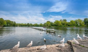 Photograph of birds on the shore of the Boating Lake at Stanley Park, Blackpool.