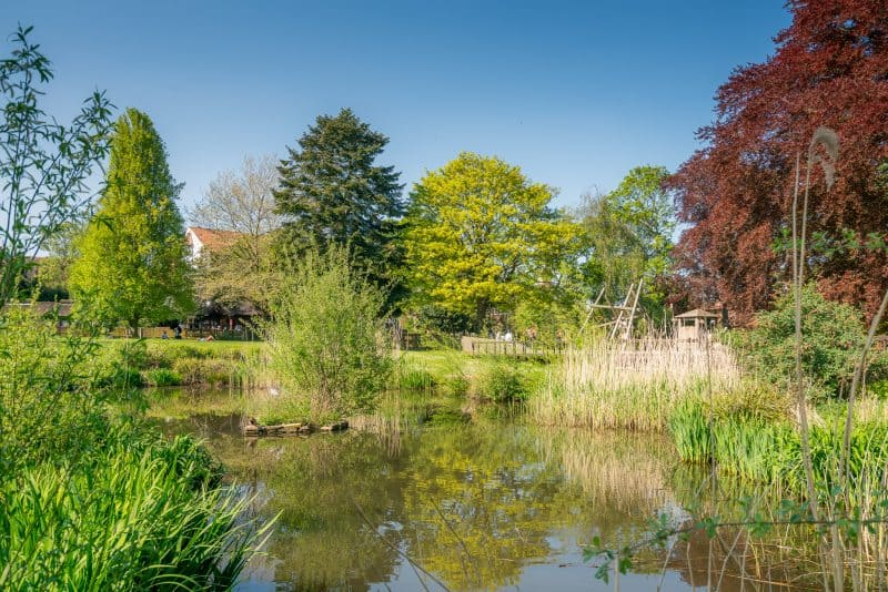 Photo of the pond at Grosvenor Park in Chester.